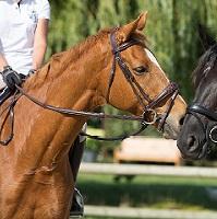 Um Batismo a cavalo no GQhorses!