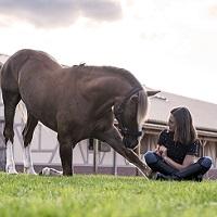 Experiência Equestre